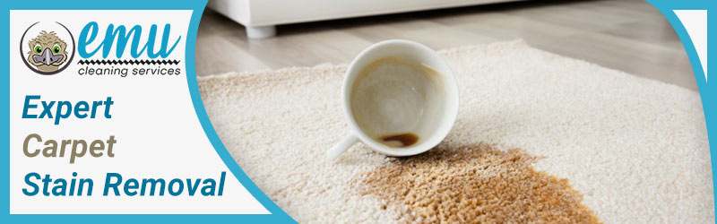 Expert Carpet Stain Removal-Brisbane